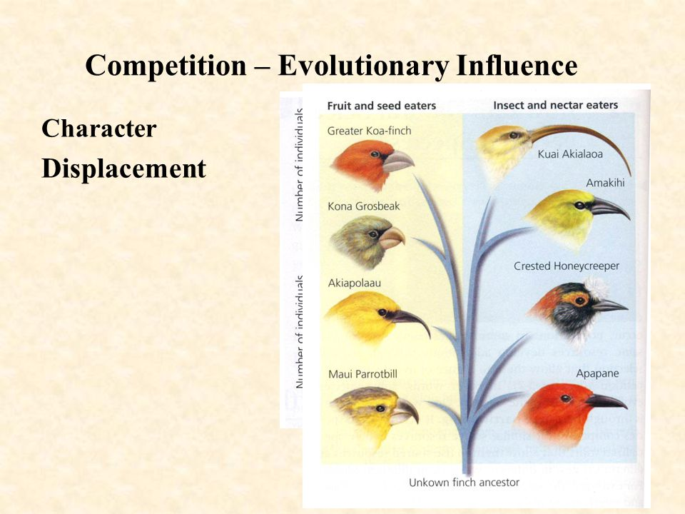 Competition – Evolutionary Influence Character Displacement