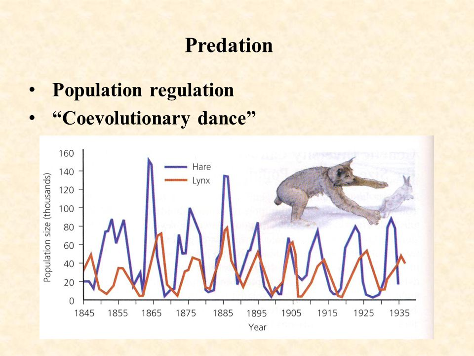 Predation Population regulation Coevolutionary dance