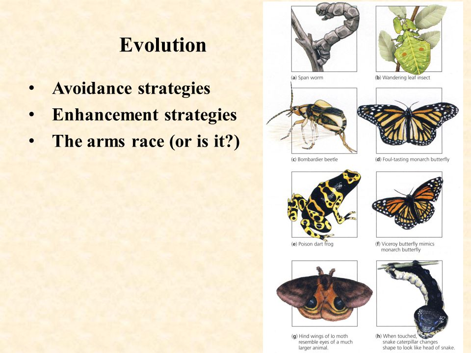 Evolution Avoidance strategies Enhancement strategies The arms race (or is it )