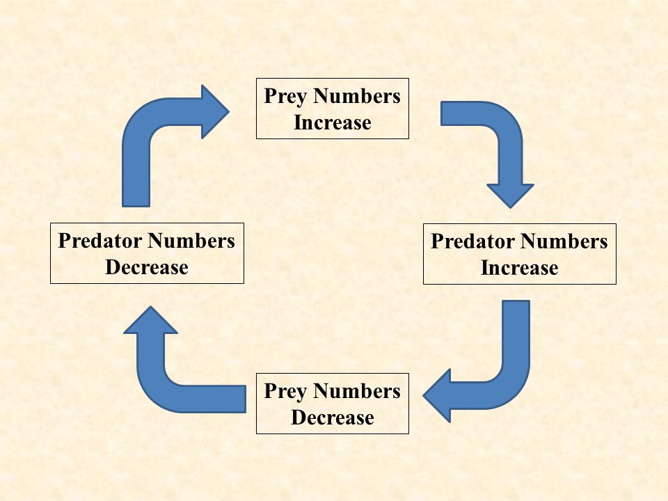 Prey Numbers Increase Predator Numbers Increase Prey Numbers Decrease Predator Numbers Decrease