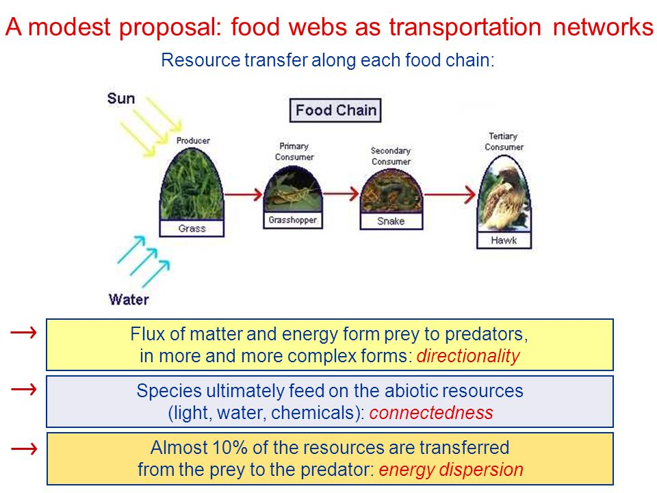A modest proposal: food webs as transportation networks Resource transfer along each food chain: Flux of matter and energy form prey to predators, in
