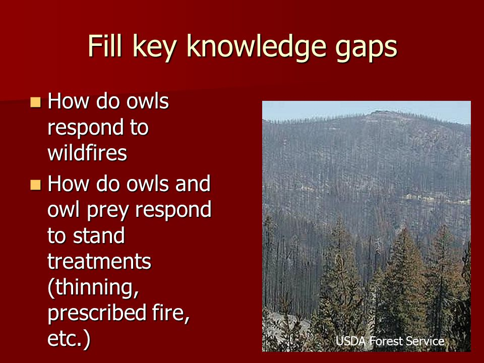 Fill key knowledge gaps How do owls respond to wildfires How do owls respond to wildfires How do owls and owl prey respond to stand treatments (thinni