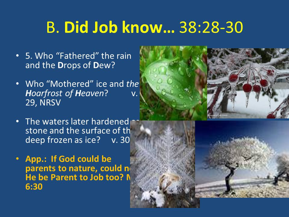 B. Did Job know… 38:28-30 5. Who Fathered the rain and the Drops of Dew.