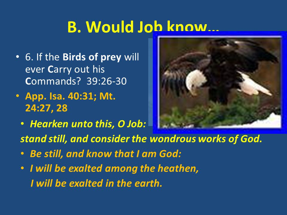 B. Would Job know… 6. If the Birds of prey will ever Carry out his Commands? 39:26-30 App. Isa. 40:31; Mt. 24:27, 28 Hearken unto this, O Job: stand s