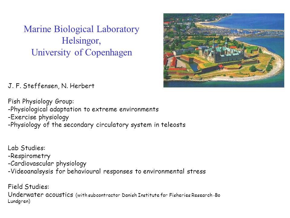 Marine Biological Laboratory Helsingor, University of Copenhagen J. F. Steffensen, N. Herbert Fish Physiology Group: -Physiological adaptation to extr