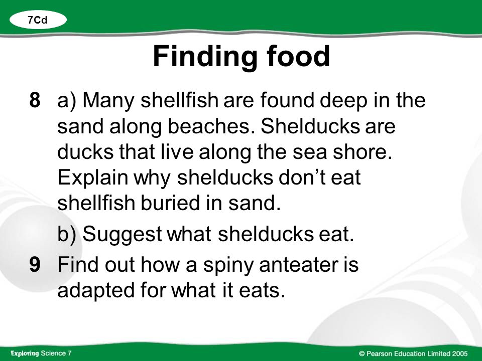 Finding food 8a) Many shellfish are found deep in the sand along beaches. Shelducks are ducks that live along the sea shore. Explain why shelducks don