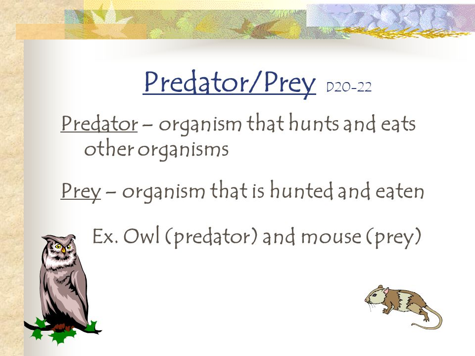 Predator/Prey D20-22 Predator – organism that hunts and eats other organisms Prey – organism that is hunted and eaten Ex. Owl (predator) and mouse (pr