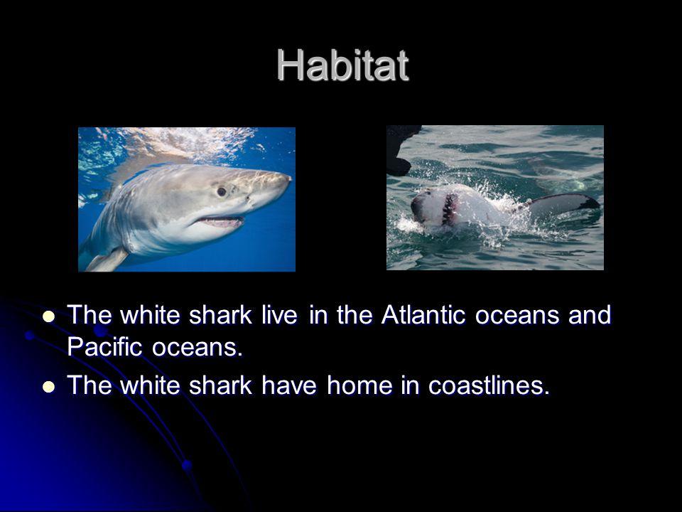Diet The white shark eats porpoises, tuna, dolphins, seals, sea lions.