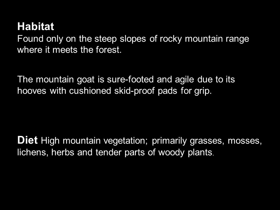 Diet High mountain vegetation; primarily grasses, mosses, lichens, herbs and tender parts of woody plants.