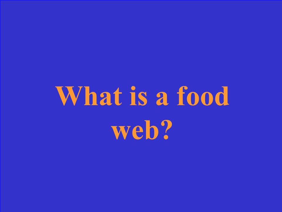 What is a food web?