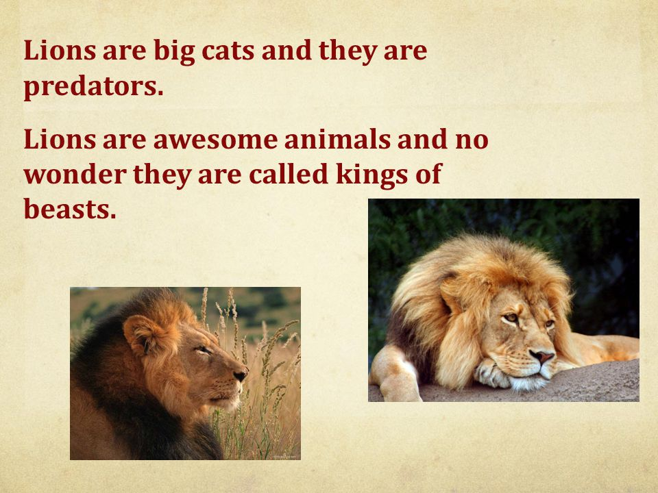Lions are big cats and they are predators.