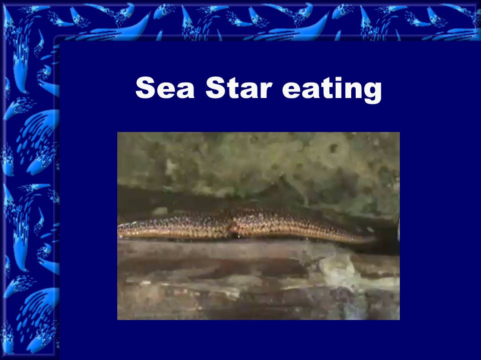 Most species of sea stars have five rays, but some have more. Some species may have more than 40 rays. Sea stars