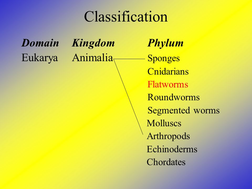 Classification DomainKingdomPhylum EukaryaAnimalia Sponges Cnidarians Flatworms Roundworms Segmented worms Molluscs Arthropods Echinoderms Chordates