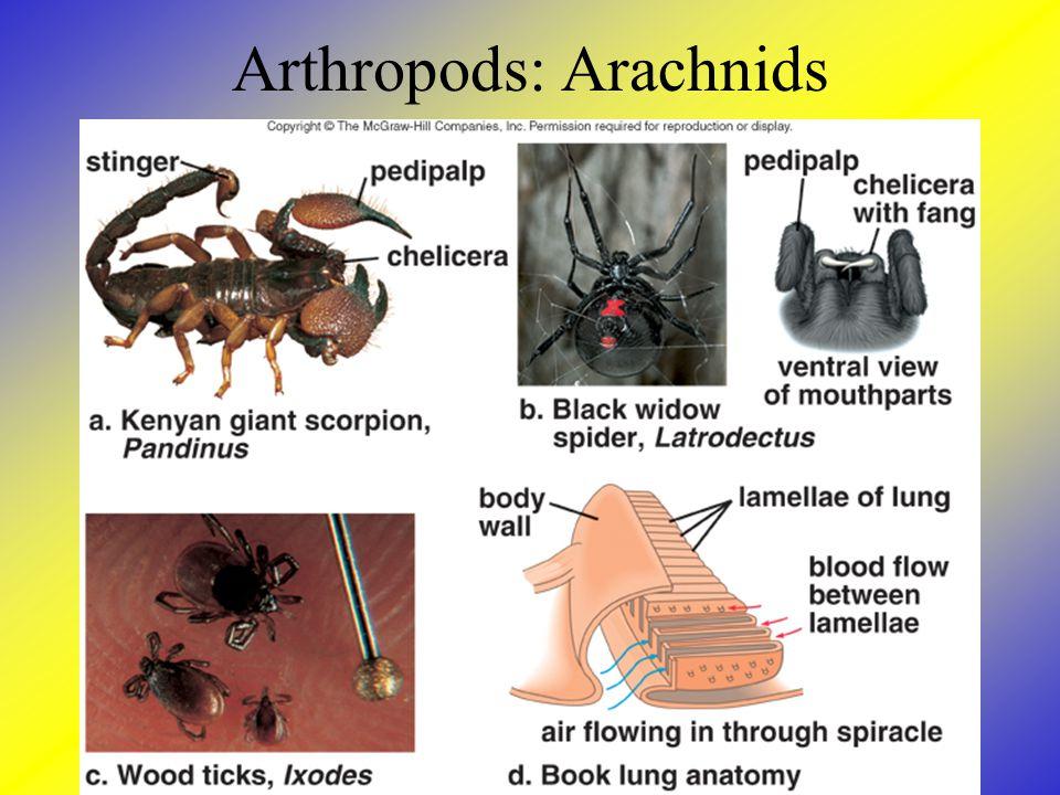 Arthropods: Arachnids
