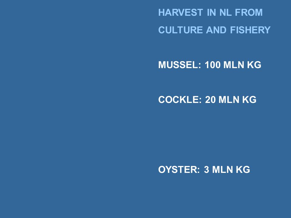 HARVEST IN NL FROM CULTURE AND FISHERY MUSSEL: 100 MLN KG COCKLE: 20 MLN KG OYSTER: 3 MLN KG