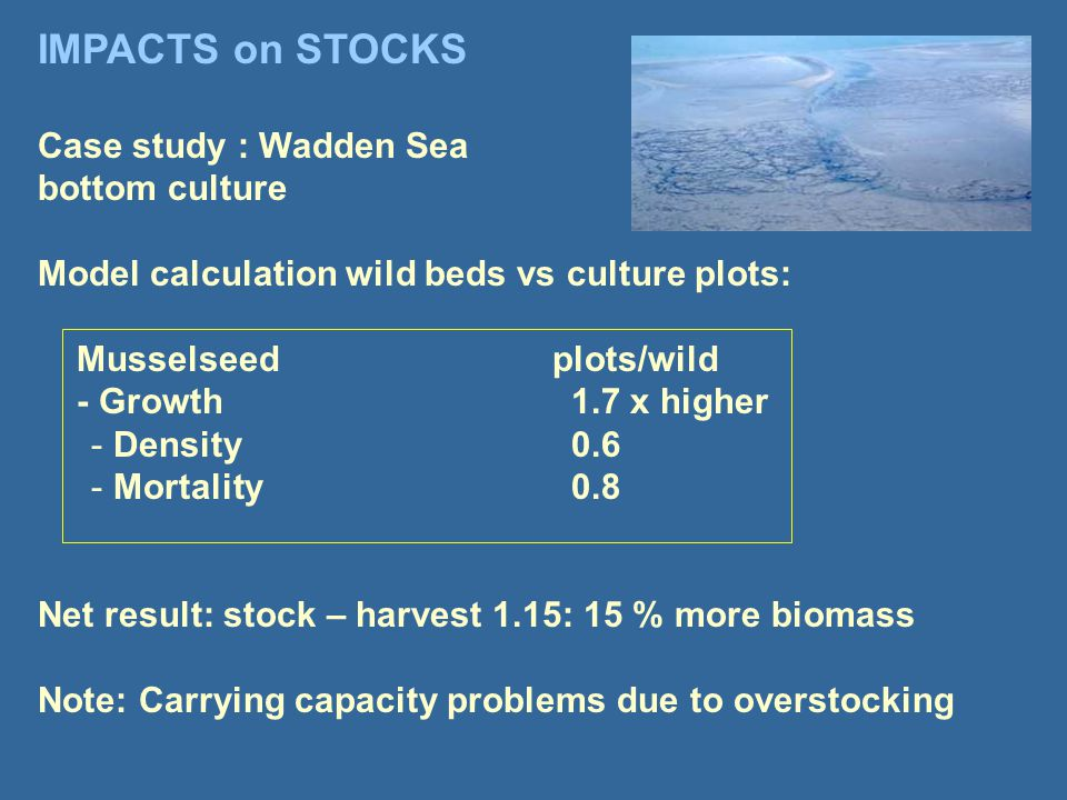 Case study : Wadden Sea bottom culture Model calculation wild beds vs culture plots: Musselseed plots/wild - Growth1.7 x higher - Density0.6 - Mortality0.8 Net result: stock – harvest 1.15: 15 % more biomass Note: Carrying capacity problems due to overstocking