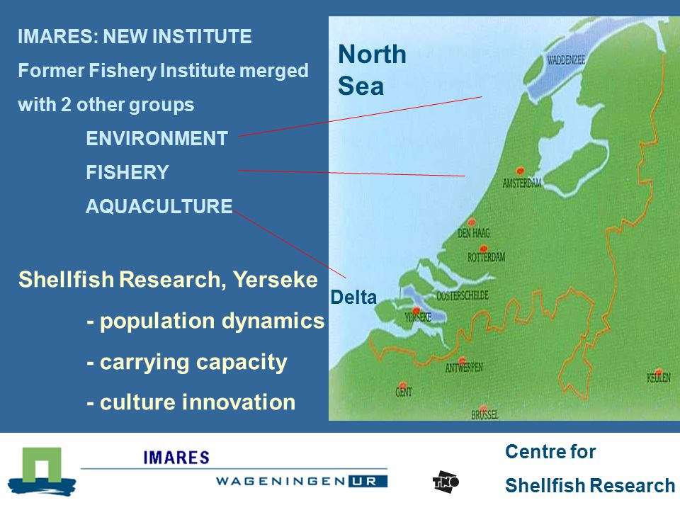 Centre for Shellfish Research Delta North Sea IMARES: NEW INSTITUTE Former Fishery Institute merged with 2 other groups ENVIRONMENT FISHERY AQUACULTURE Shellfish Research, Yerseke - population dynamics - carrying capacity - culture innovation