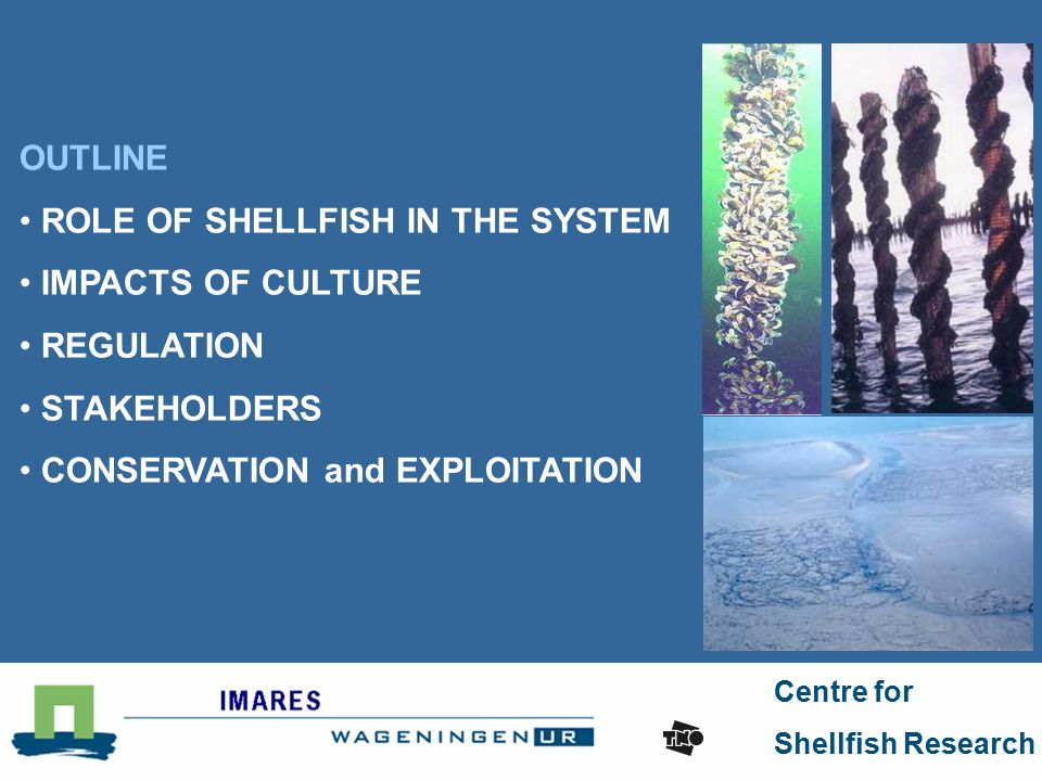 Centre for Shellfish Research OUTLINE ROLE OF SHELLFISH IN THE SYSTEM IMPACTS OF CULTURE REGULATION STAKEHOLDERS CONSERVATION and EXPLOITATION