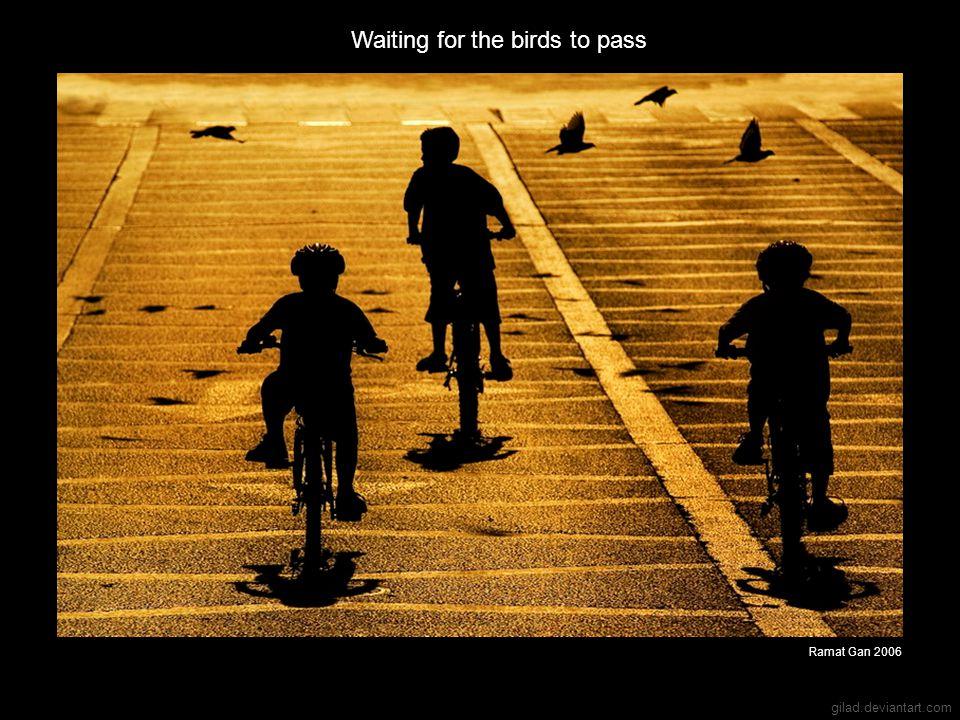 gilad.deviantart.com Waiting for the birds to pass Ramat Gan 2006