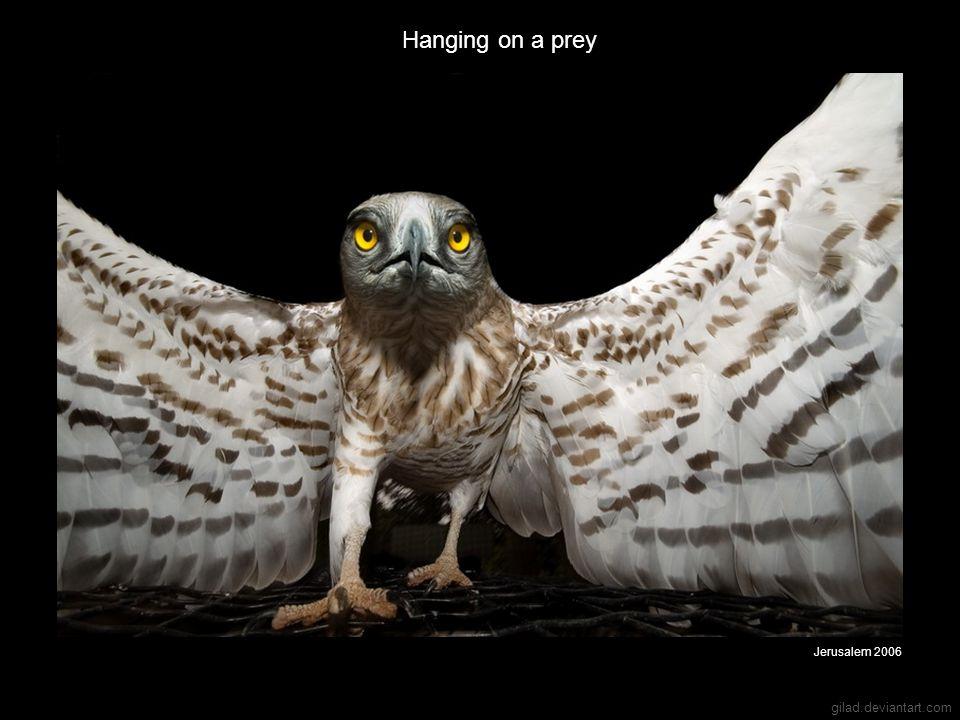 gilad.deviantart.com Hanging on a prey Jerusalem 2006