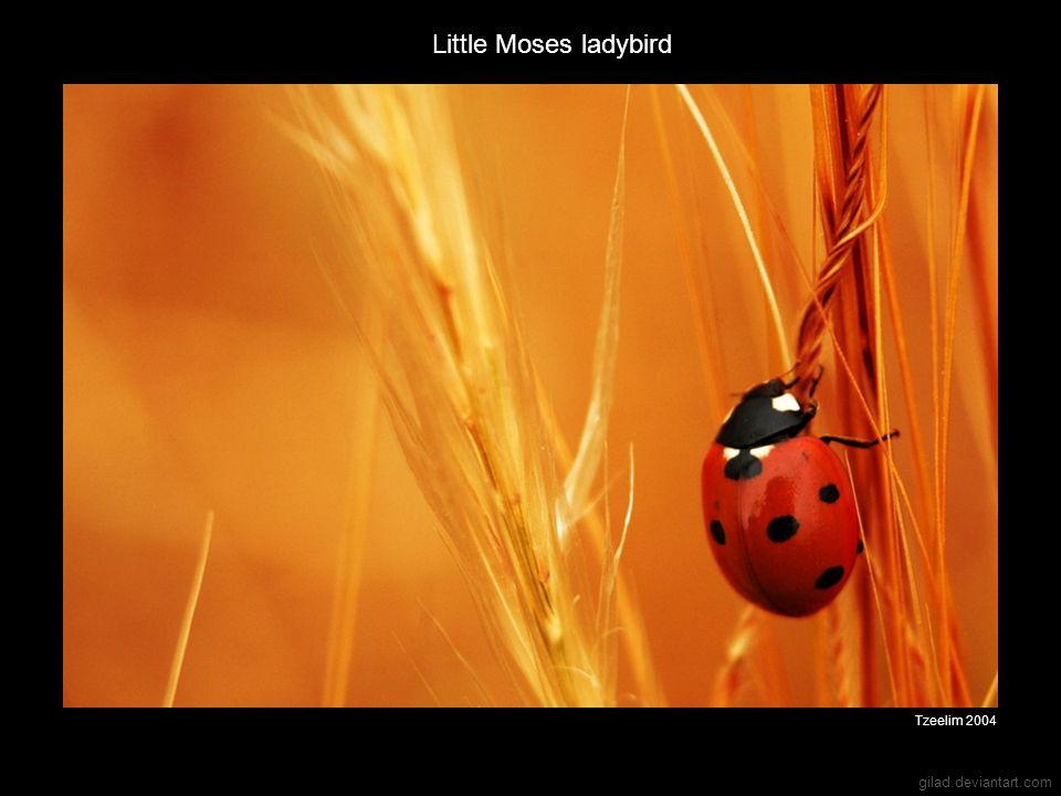 gilad.deviantart.com Little Moses ladybird Tzeelim 2004