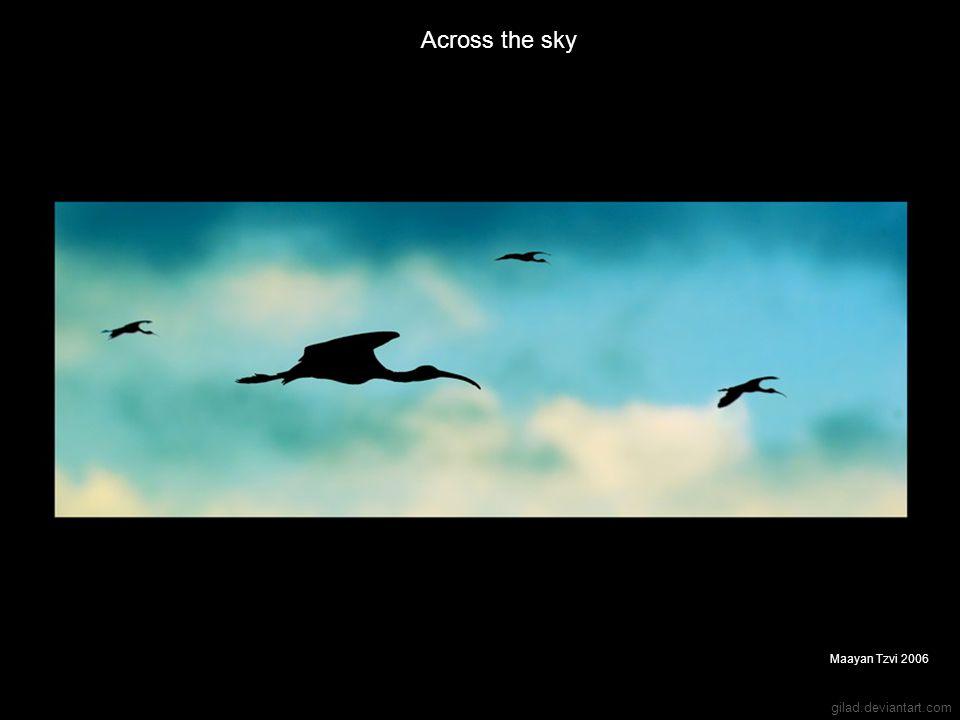 gilad.deviantart.com Across the sky Maayan Tzvi 2006