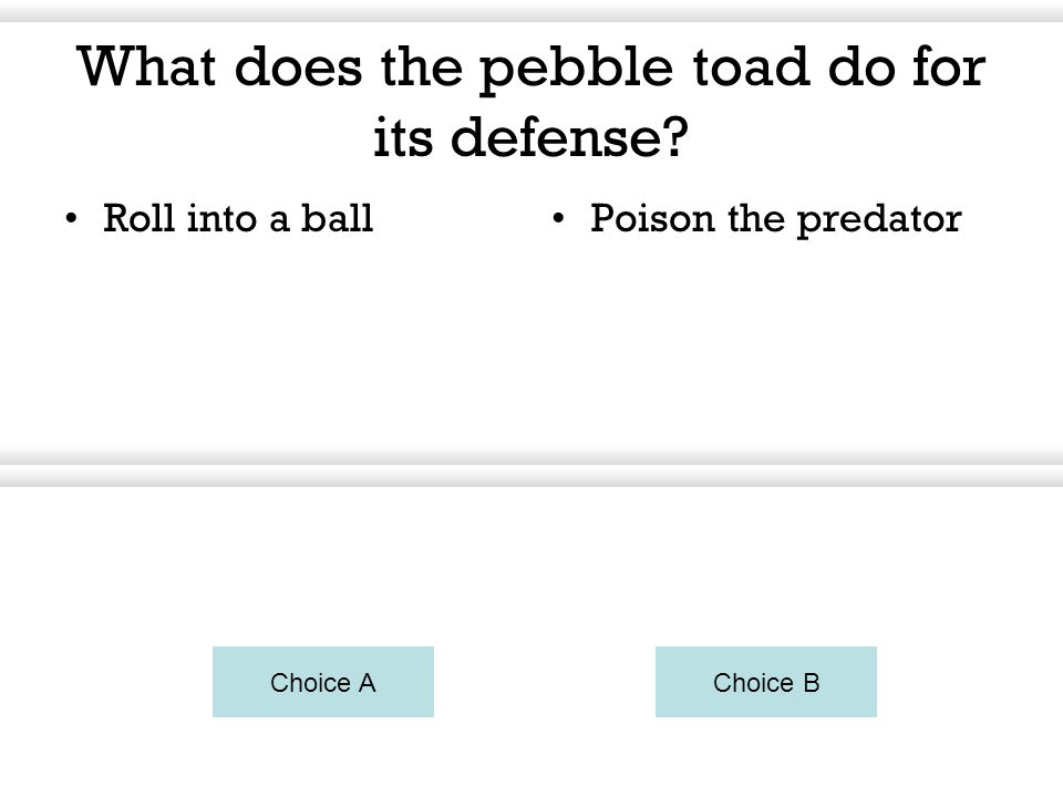 What does the pebble toad do for its defense? Roll into a ballPoison the predator Choice AChoice B You can right click on the blue buttons to change t