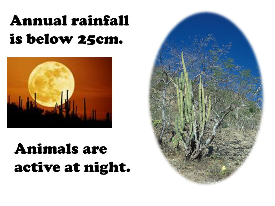Annual rainfall is below 25cm. Animals are active at night.