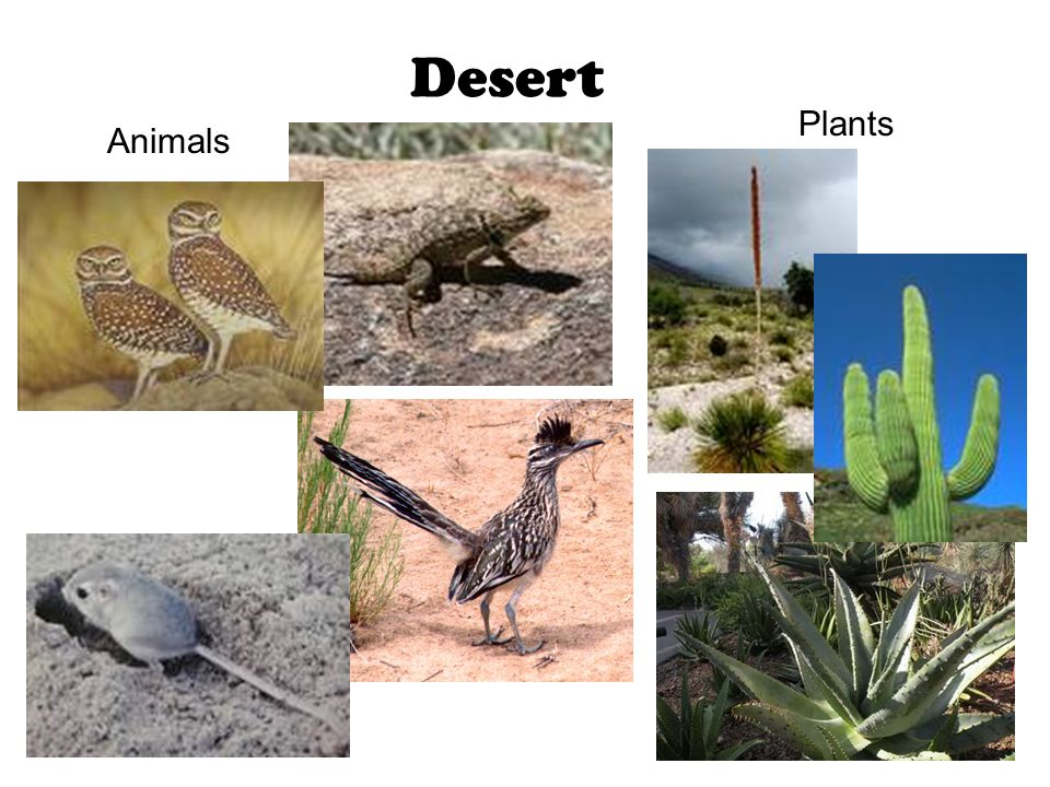 Desert Animals Plants