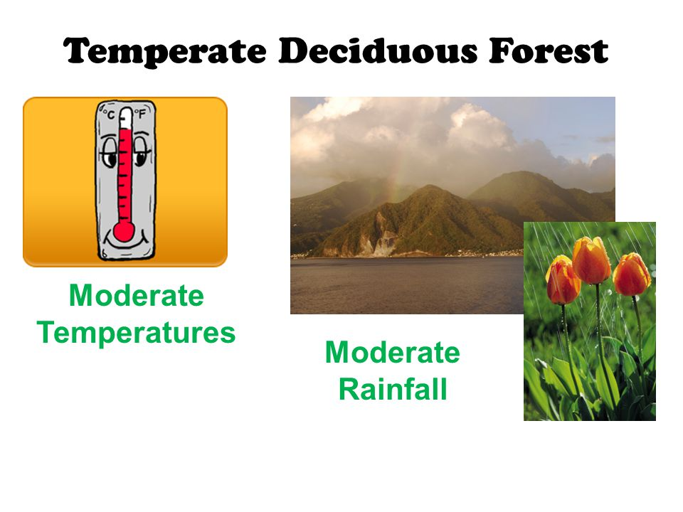 Temperate Deciduous Forest Moderate Temperatures Moderate Rainfall