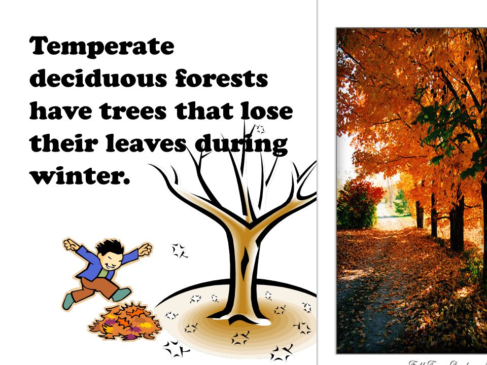 Temperate deciduous forests have trees that lose their leaves during winter.
