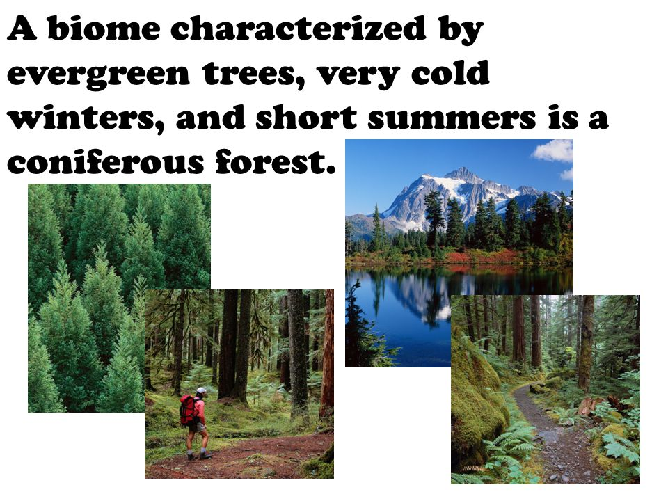 A biome characterized by evergreen trees, very cold winters, and short summers is a coniferous forest.