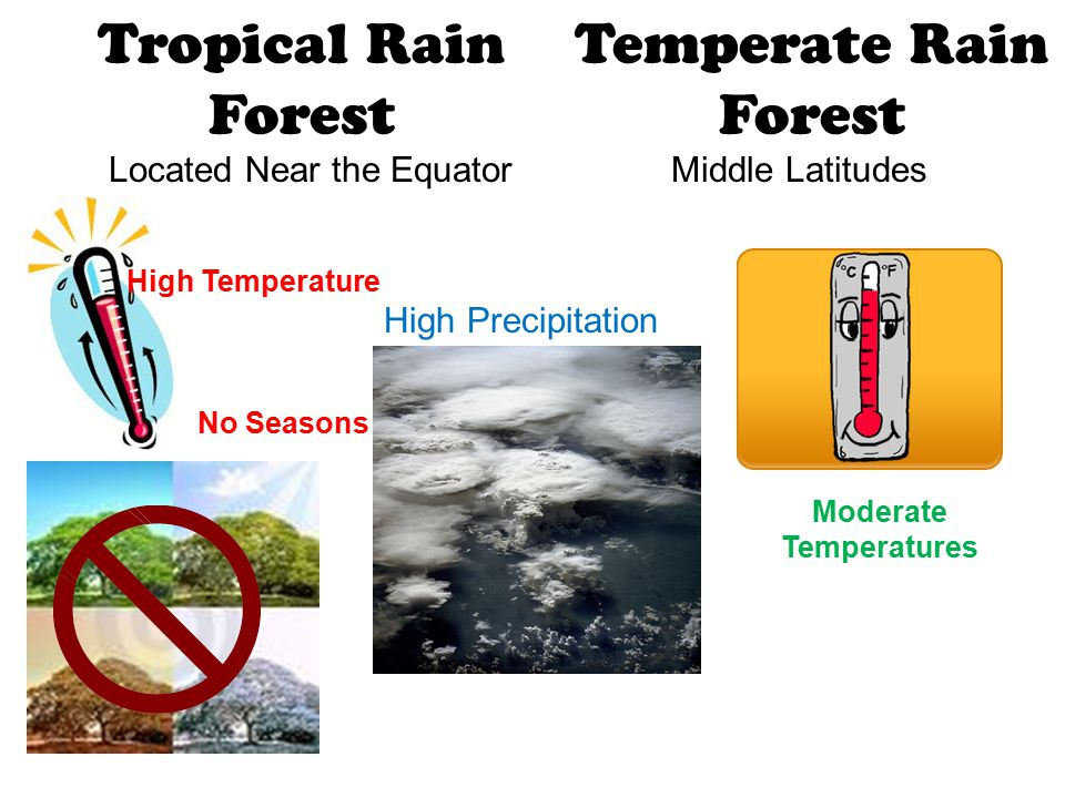 Tropical Rain Forest Located Near the Equator High Precipitation No Seasons Temperate Rain Forest Middle Latitudes High Temperature Moderate Temperatu
