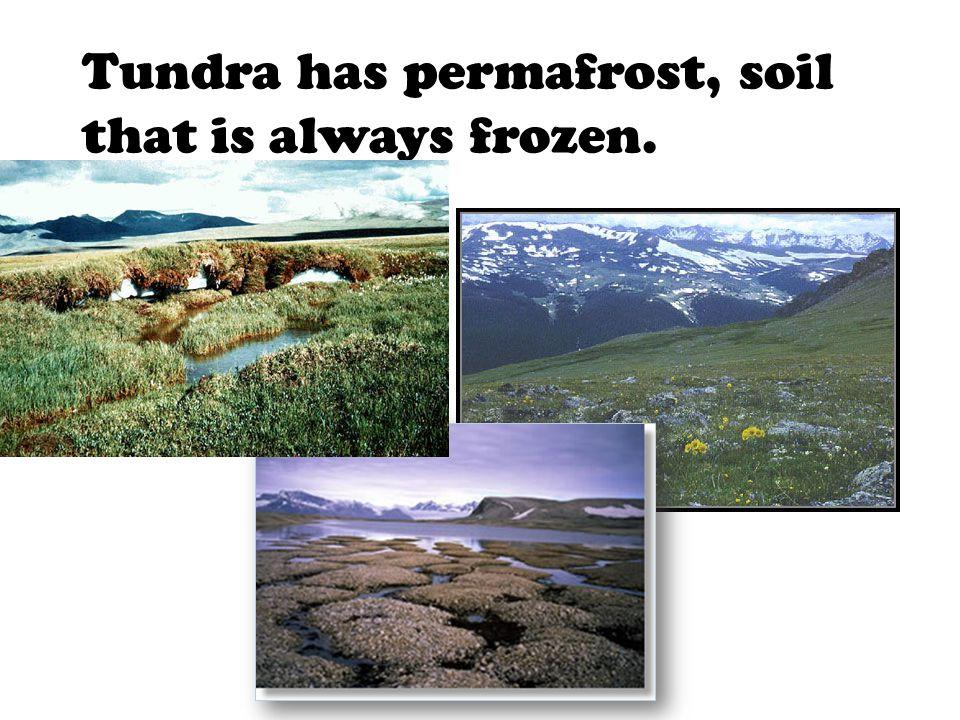 Tundra has permafrost, soil that is always frozen.