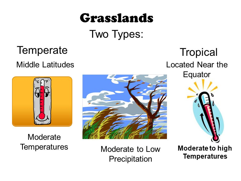 Grasslands Temperate Tropical Moderate to Low Precipitation Two Types: Moderate Temperatures Located Near the Equator Middle Latitudes Moderate to hig