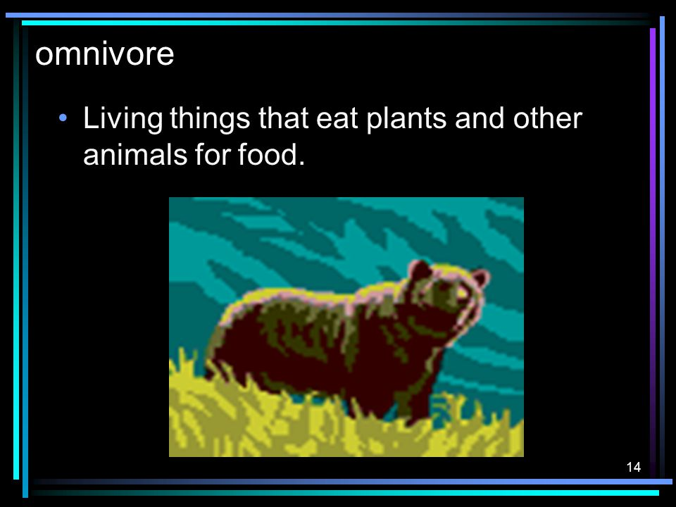 13 carnivore Living things that hunt other animals for food.