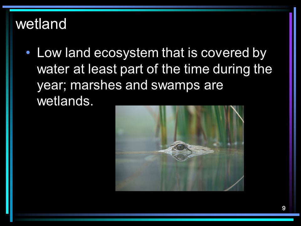 8 tundra Land ecosystem that is cold and dry.