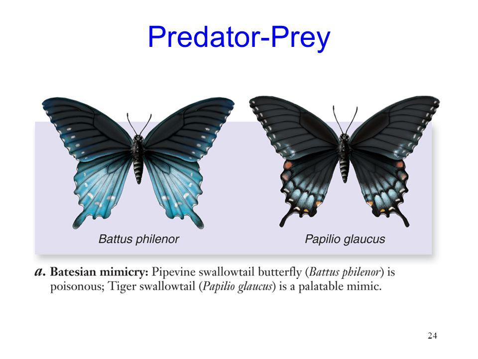 24 Predator-Prey