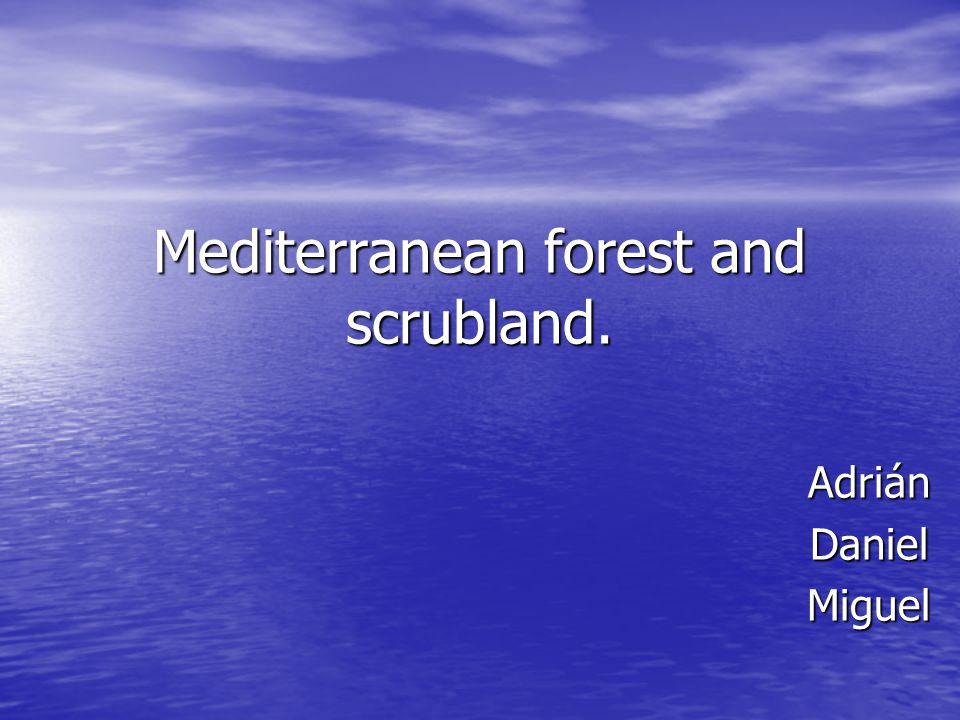 Mediterranean forest and scrubland. AdriánDanielMiguel