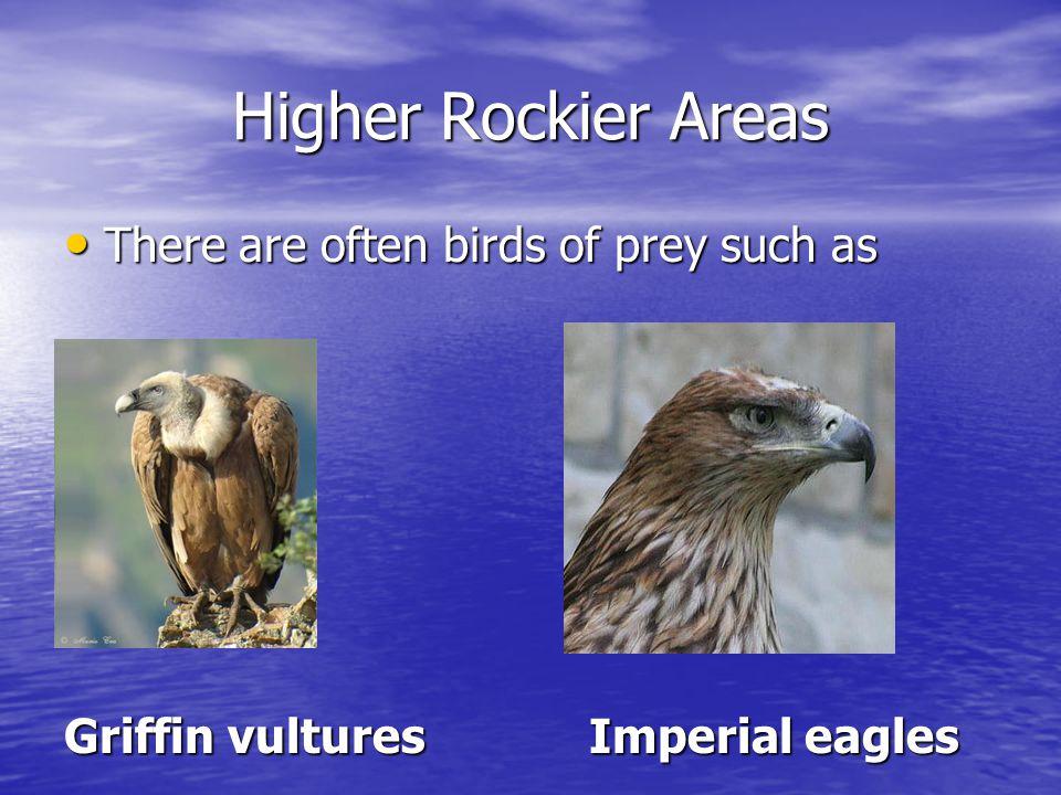 Finally protected species like Black stork