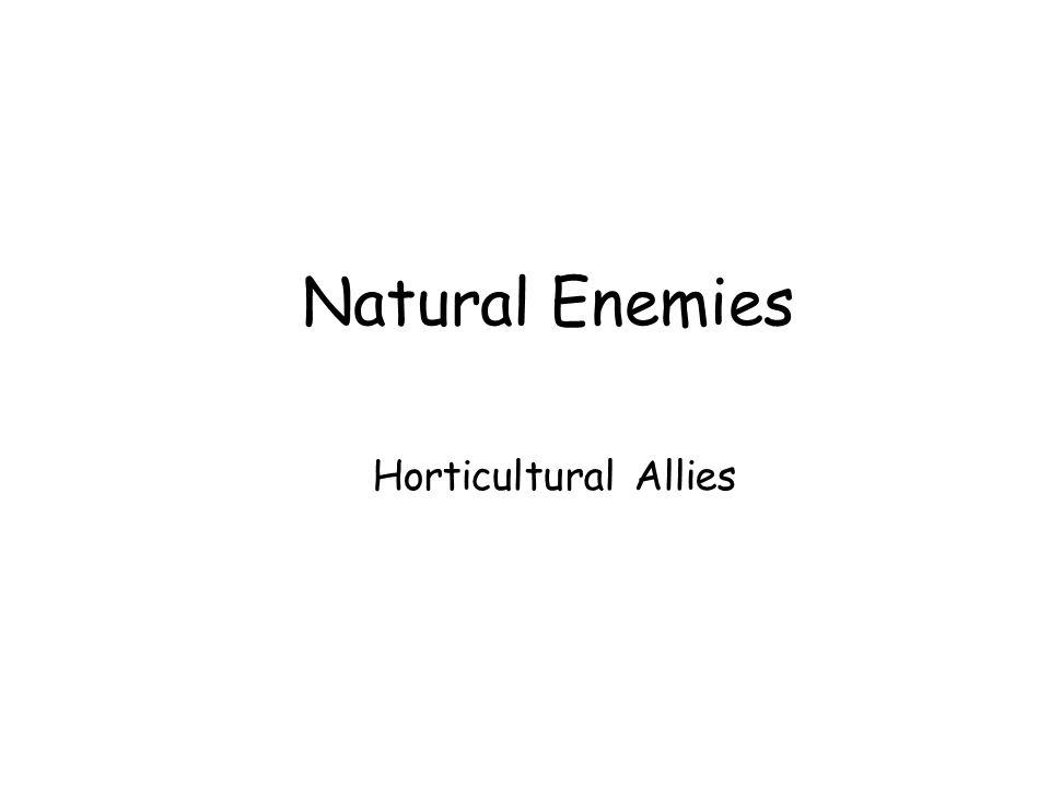 Common Natural Enemies Decollate snails control...