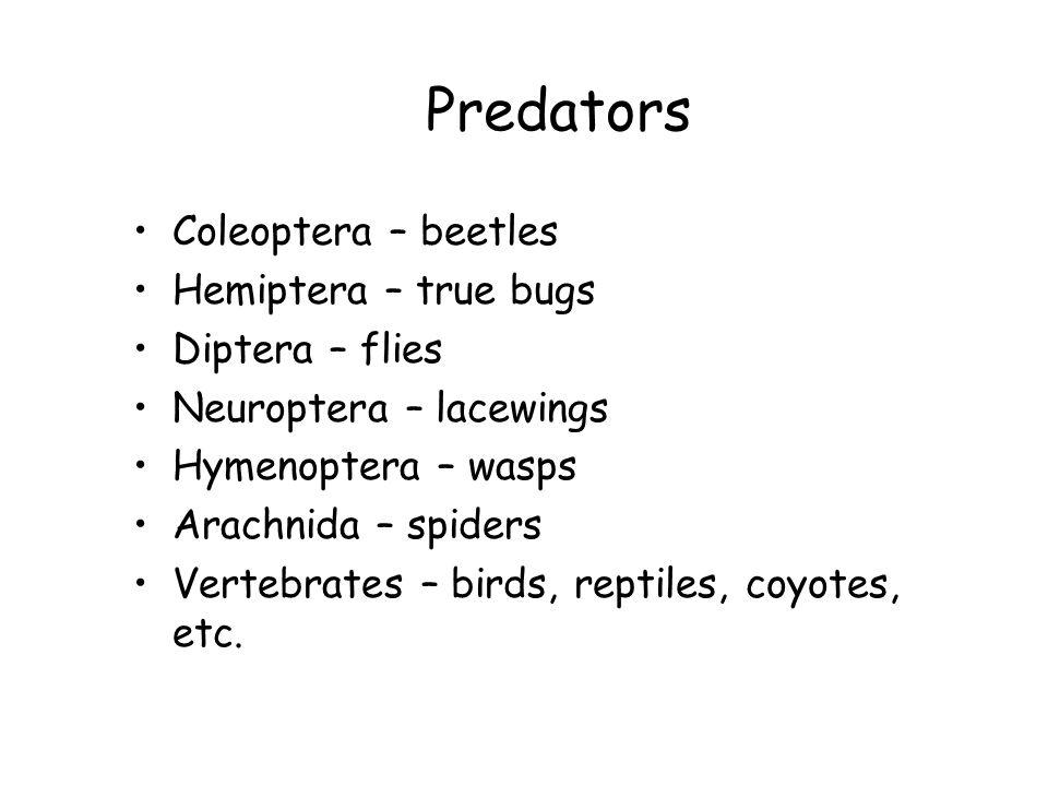 Predators Coleoptera – beetles Hemiptera – true bugs Diptera – flies Neuroptera – lacewings Hymenoptera – wasps Arachnida – spiders Vertebrates – birds, reptiles, coyotes, etc.