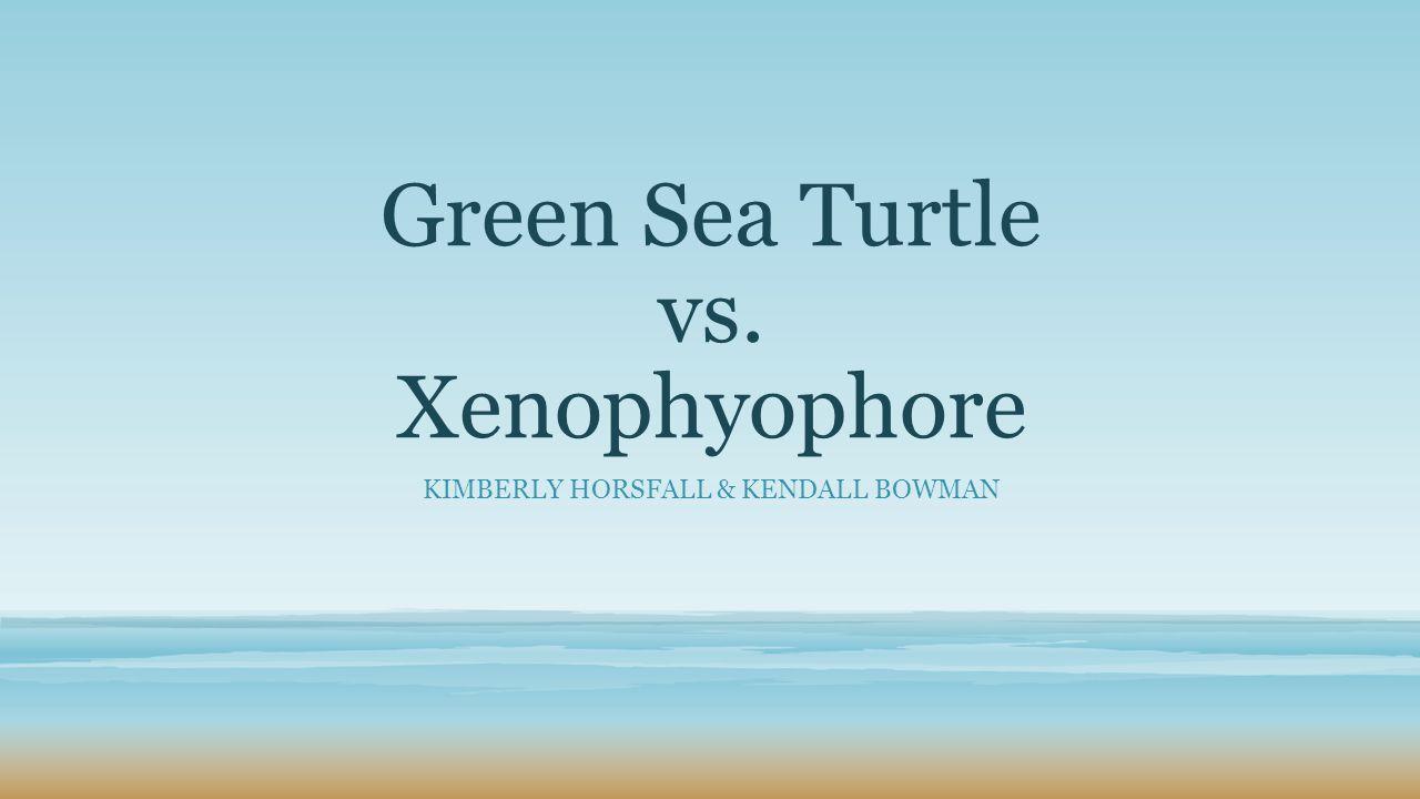 Green Sea Turtle vs. Xenophyophore KIMBERLY HORSFALL & KENDALL BOWMAN