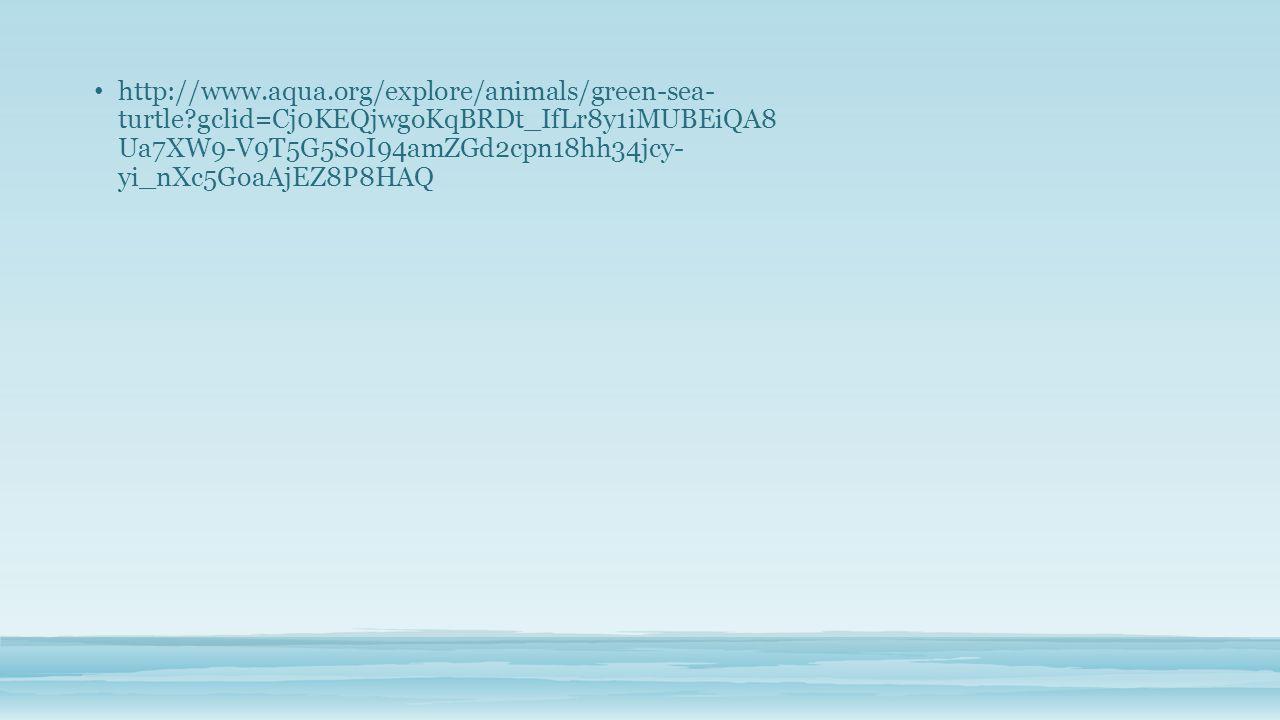 http://www.aqua.org/explore/animals/green-sea- turtle?gclid=Cj0KEQjwgoKqBRDt_IfLr8y1iMUBEiQA8 Ua7XW9-V9T5G5S0I94amZGd2cpn18hh34jcy- yi_nXc5GoaAjEZ8P8HAQ