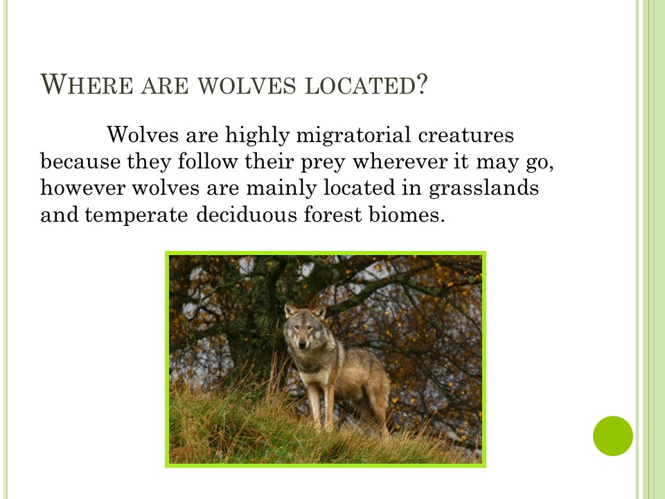 W HERE ARE WOLVES LOCATED .