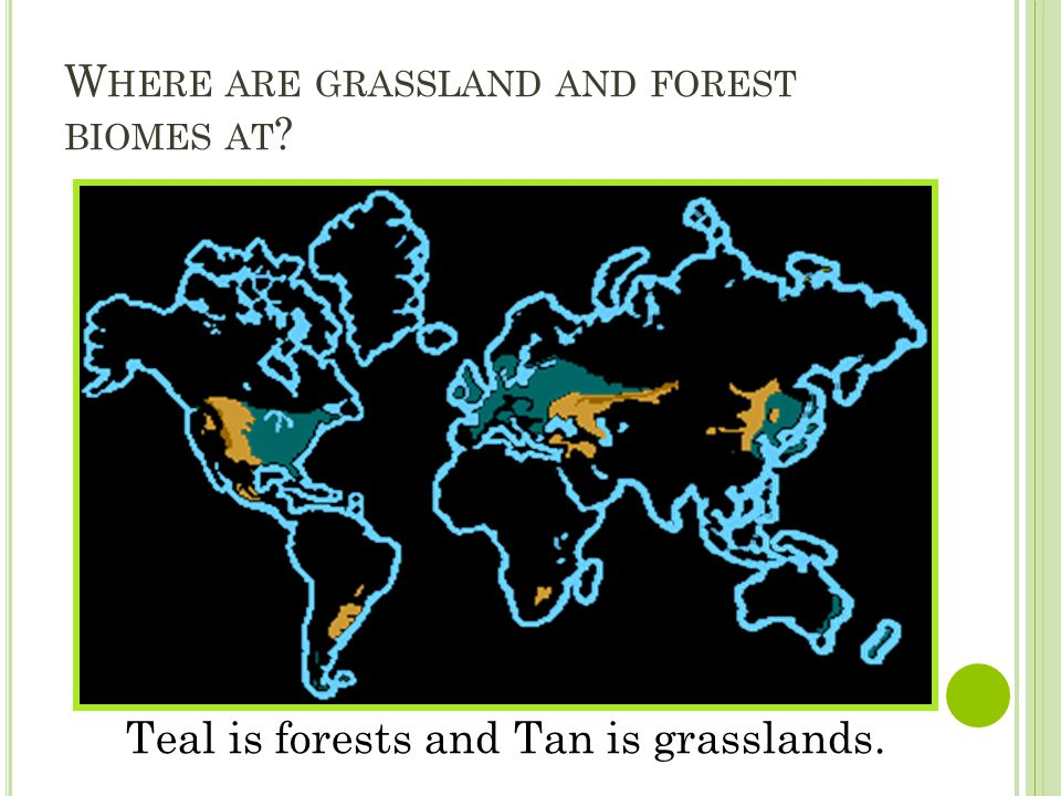 W HERE ARE GRASSLAND AND FOREST BIOMES AT ? Teal is forests and Tan is grasslands.