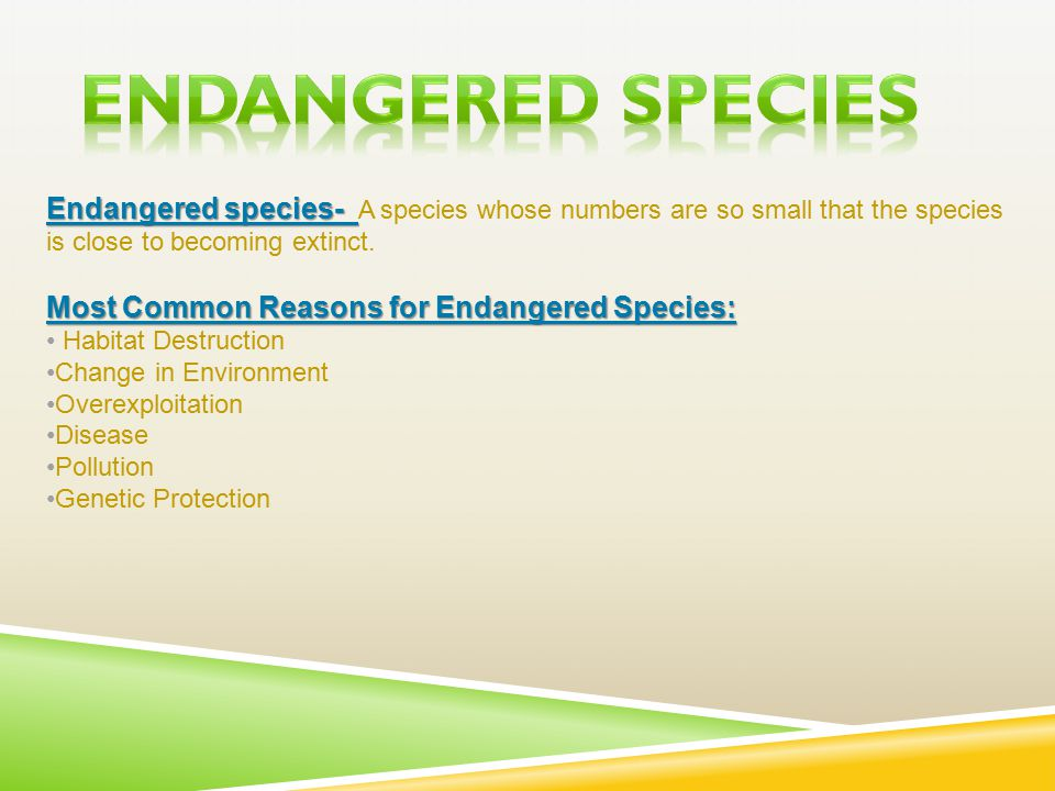 Endangered species- Endangered species- A species whose numbers are so small that the species is close to becoming extinct.
