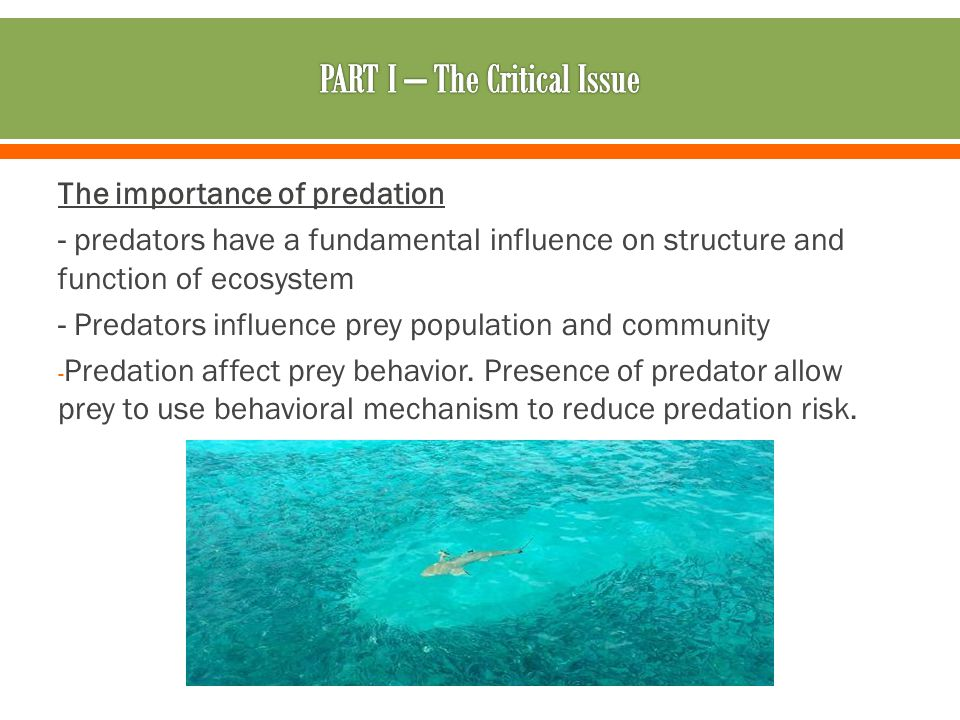 The importance of predation - predators have a fundamental influence on structure and function of ecosystem - Predators influence prey population and community - Predation affect prey behavior.