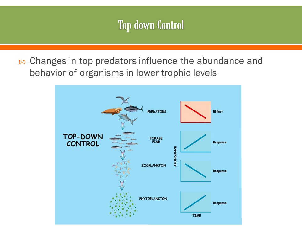 Changes in top predators influence the abundance and behavior of organisms in lower trophic levels