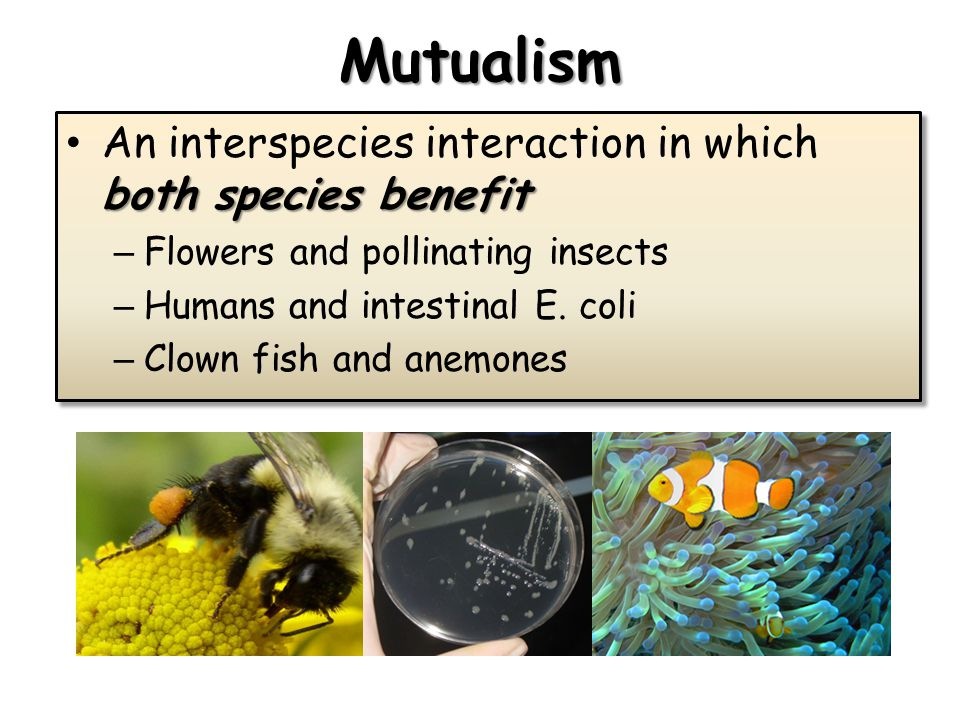 Mutualism both species benefit An interspecies interaction in which both species benefit – Flowers and pollinating insects – Humans and intestinal E.